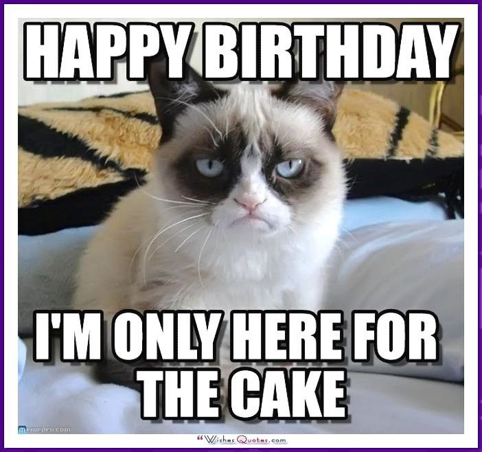 Happy Birthday Grumpy Cat Meme Happy Birthday Memes with Funny Cats Dogs and Cute Animals