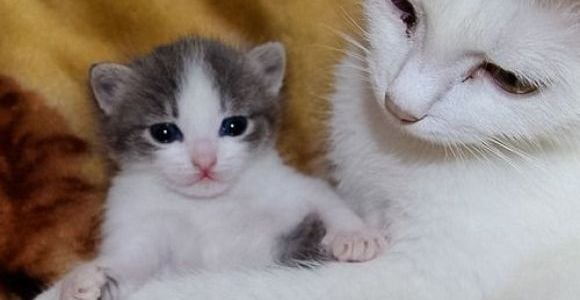 Cute Kitten Baby Cat to see more funny cats