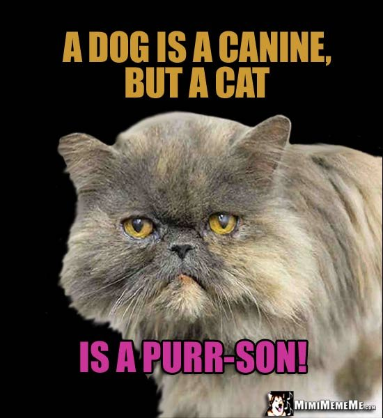 Cat Truths A dog is a canine but a cat is a purr