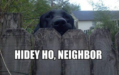 Take the Beautiful Funny Dog Pictures with Captions Black Labs
