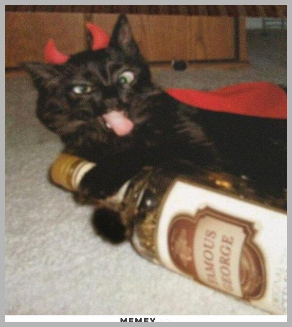 Take the Beautiful Funny Drunk Cat Memes