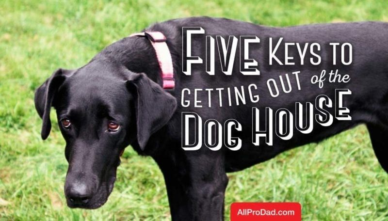 5 Keys to Getting out of the Dog House