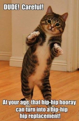 Take the Best Of Cat Pictures with Captions Funny Friends
