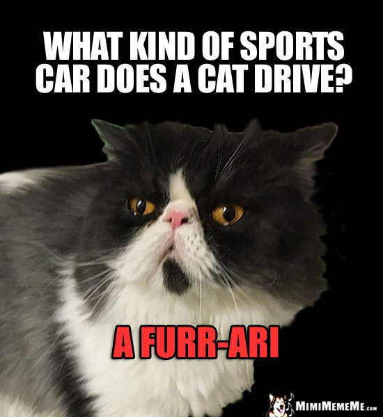 Funny Cat Trivia What kind of sports car does a cat drive A Furr