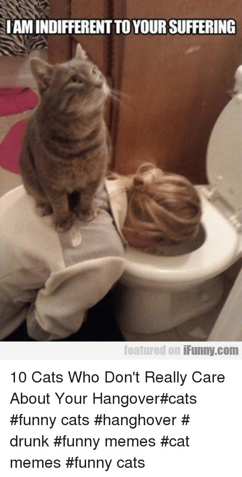 Cats Drunk and Funny IAMINDIFFERENT TO YOUR SUFFERING featured on iFunny