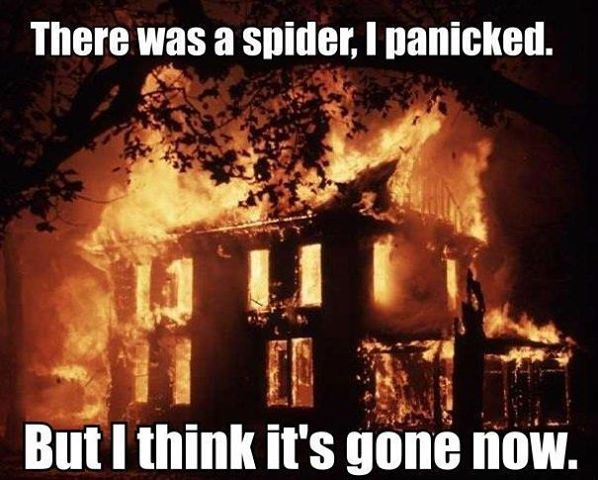 Scared of Spiders This reminds me of the Athena kids LOL
