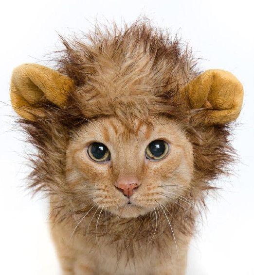 Funny Cat Lion Costume