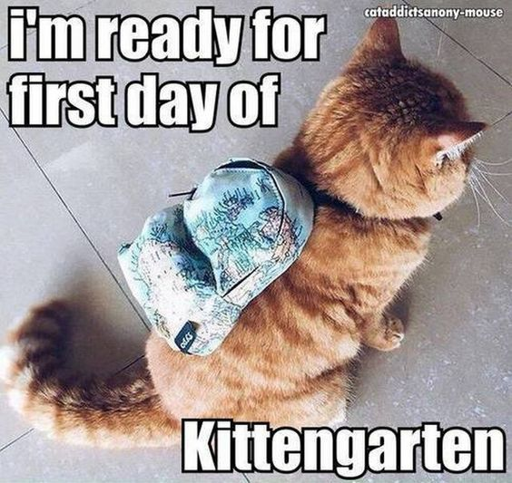 I m Ready For The First Day Kittengarten