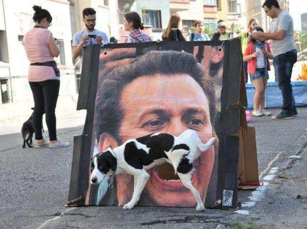7a480d30ffb71f80cbe0bc13e6945a93 funny dogs funny animals