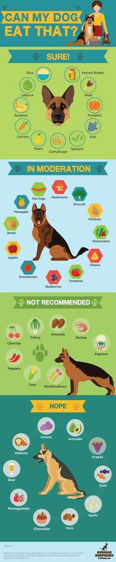 Safe Human Food For Your Dogs Info Graphic Everything you want to know about GSDs