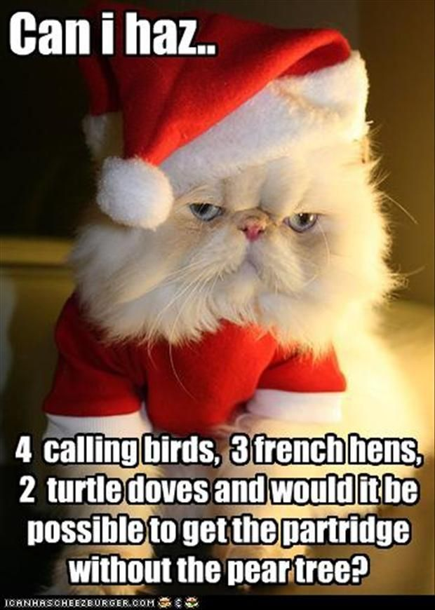A cat s letter to Santa Funny Christmas Cat funny christmas cat