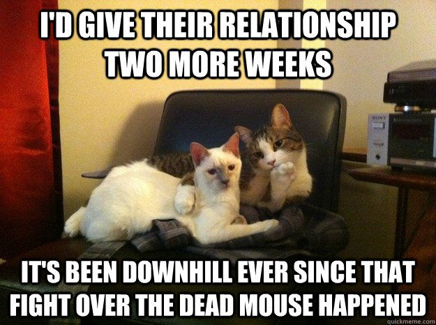 I d give their relationship two more weeks It s been downhill ever since that fight over the dead mouse happened