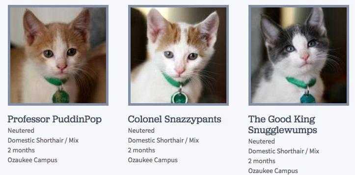 Someone at the Wisconsin Humane Society is really good at naming cats