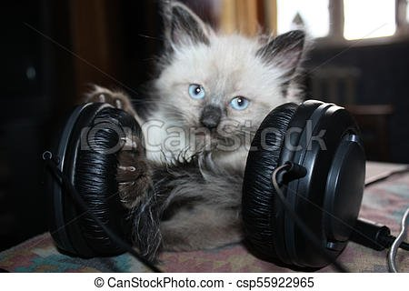 Funny cat or kitten in headphones listening music csp