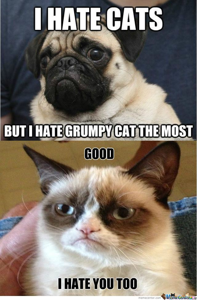 Grumpy Cat And Dog by silvap Meme Center