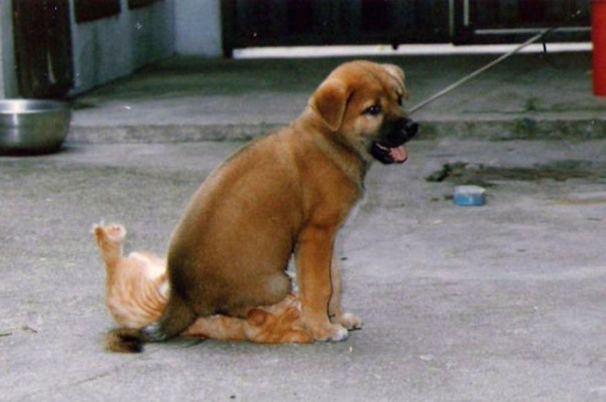 funny evil dog 4 605