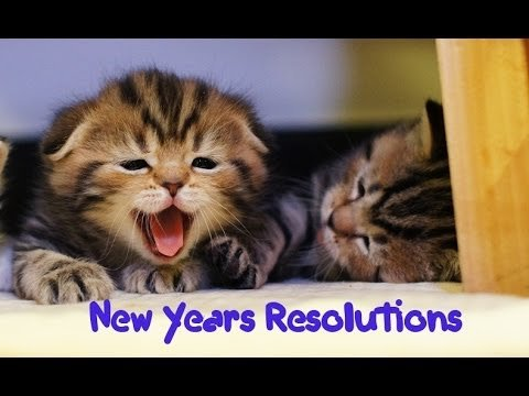 New Year s Resolutions of my Funny Cats and Cute Kittens