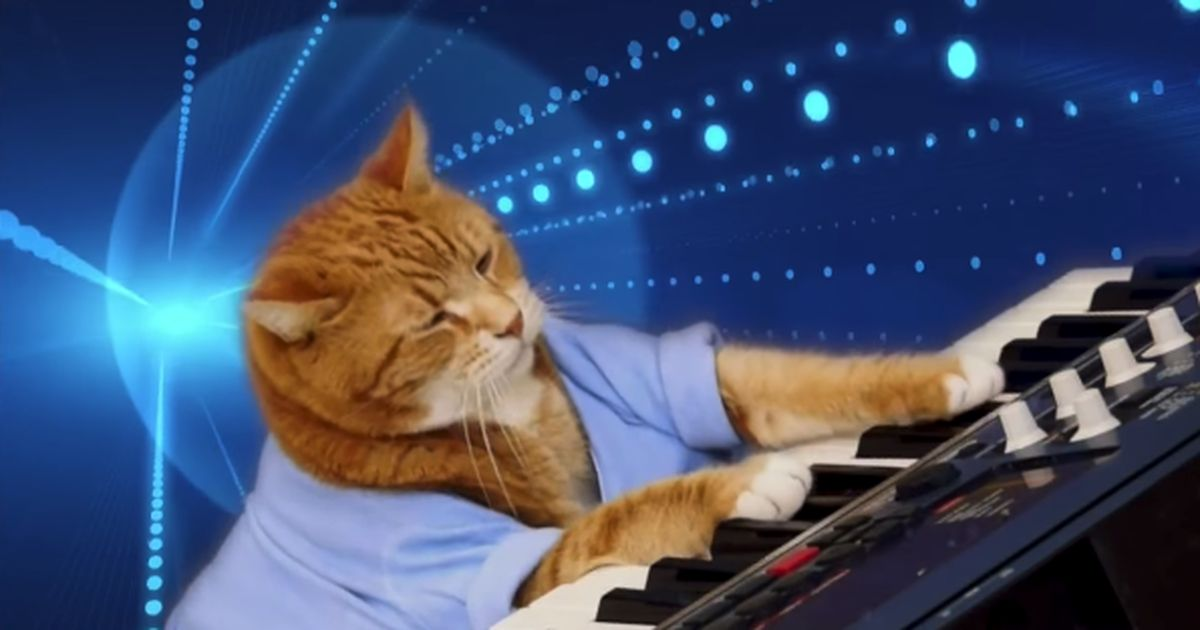 RIP Bento Keyboard Cat and synth champion of our hearts
