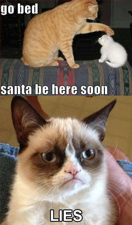 Funny Grumpy Cat Memes Grumpy Cat Quotes Funny Cats Cute Cats Funny