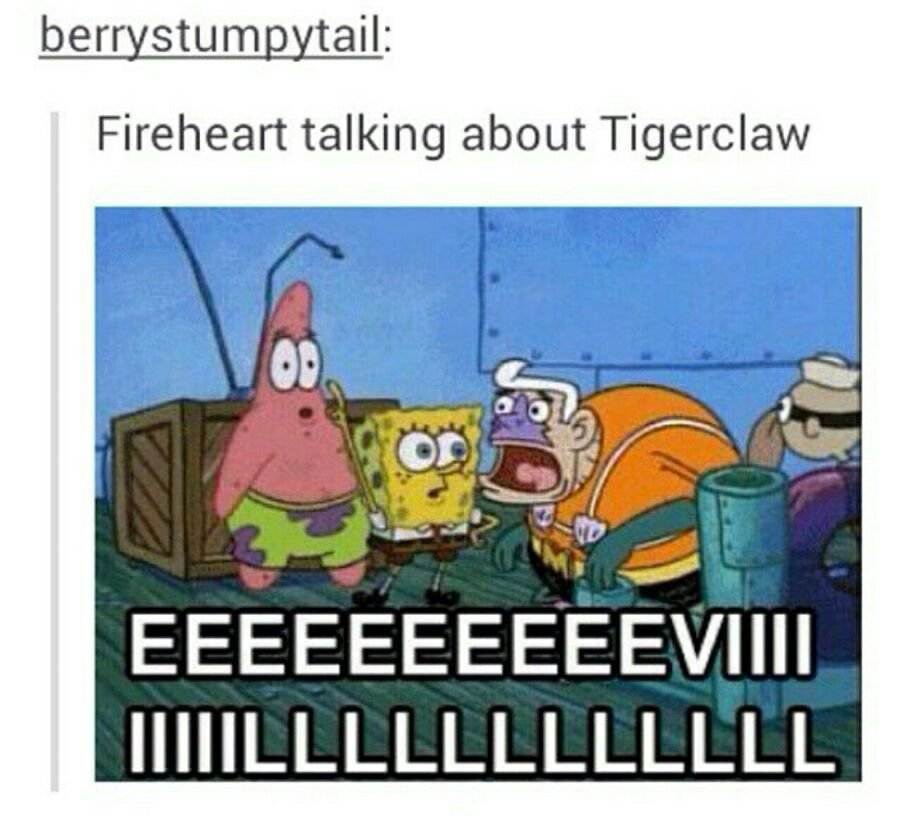 Download The New Funny Warrior Cat Memes Tigerclaw Hilarious Pets