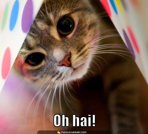 "Numero Tres ""Om Nom Nom Nom"" meme The saying ""om nom nom nom"" has be e so popular on its own from all the om nom nom memes being made From the cute cat"