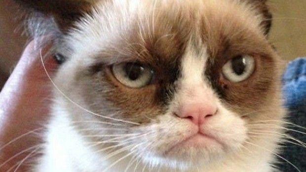 Grumpy Cat Meme 11