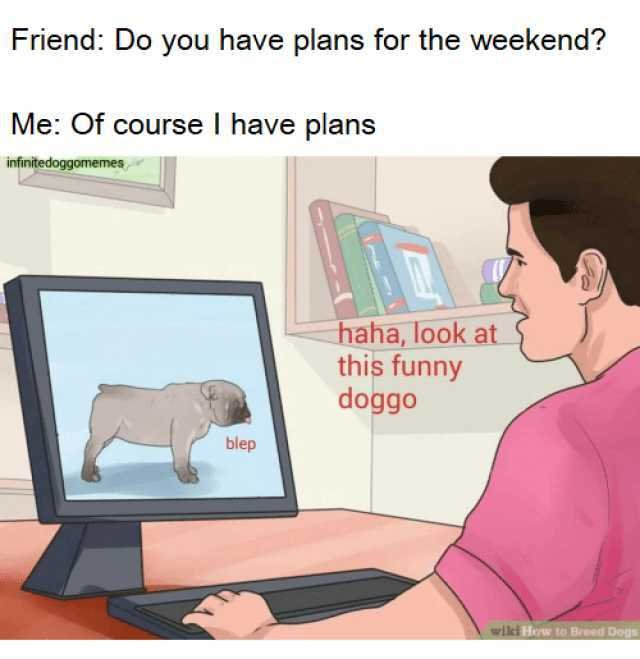 Friend Do you have plans for the weekend Me course I have plans infinitedoggomemes