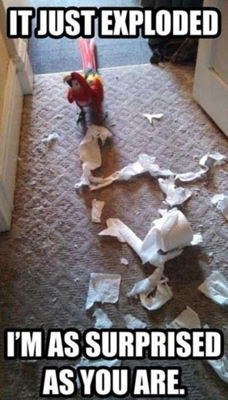 Macaw makes a mess