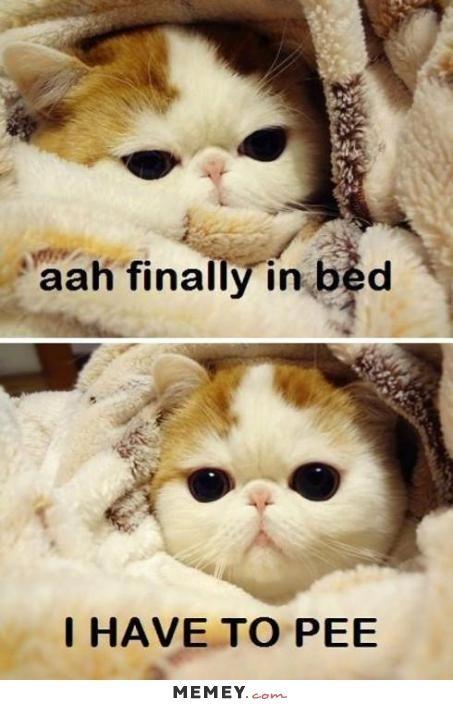 cute funny kitten memes Google Search