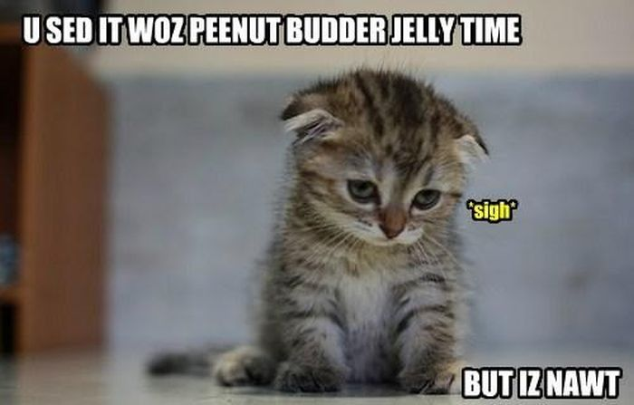 Okay this is a super cute kitten picture This little guy is filled with emotion and persuasive skills So why on earth would he not have grammar skills