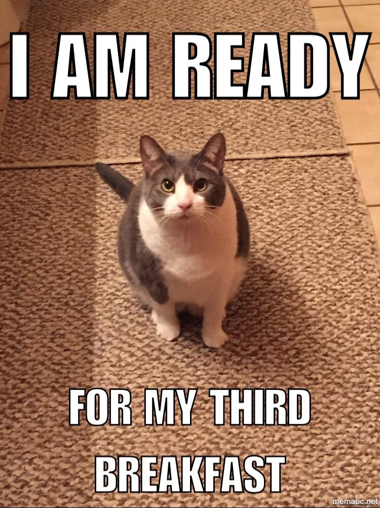 Hungry cat feed me meow Melody the cat Funny Animal Pics Funny Cat