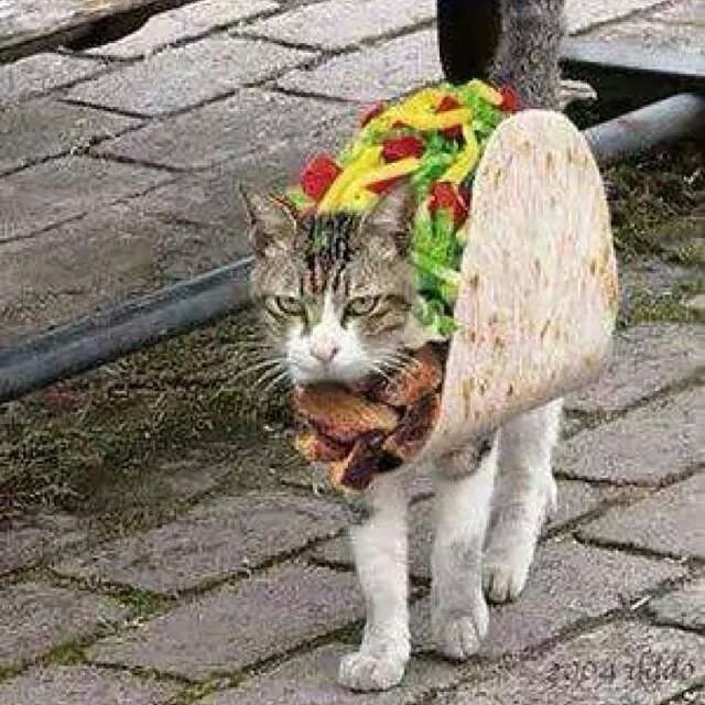 MEXICAN CHINESE FOOD Pet Halloween Costumes Cat Costumes Taco Costume Happy Halloween