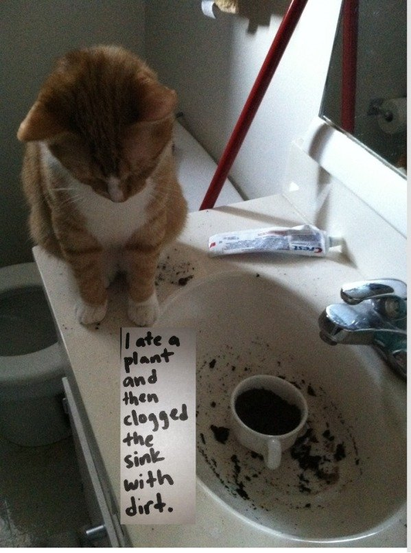 pretty cat ate plant and then clogged the sink 0012