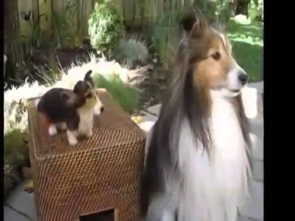 Most Funny Best of Funny cats cute cats Top 10 funny dogs funny