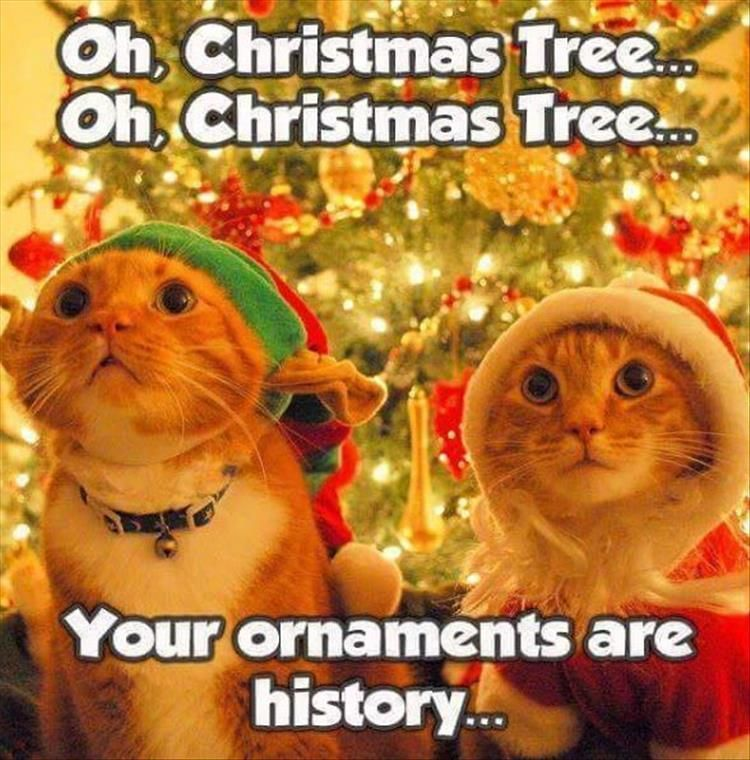 Funny Animal The Day – 25 Pics Christmas Cat Memes Christmas Quotes Funny