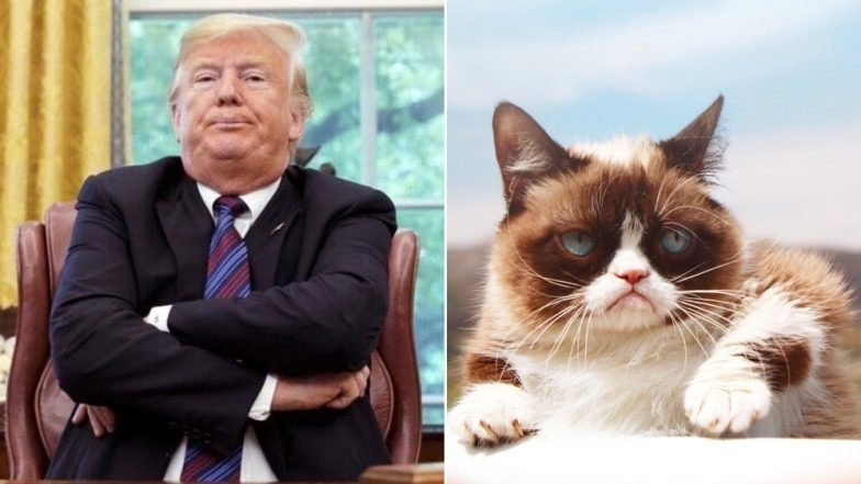 From Grumpy Cat to Donald Trump Google Trends Show Steady Increase in Funny Meme Searches