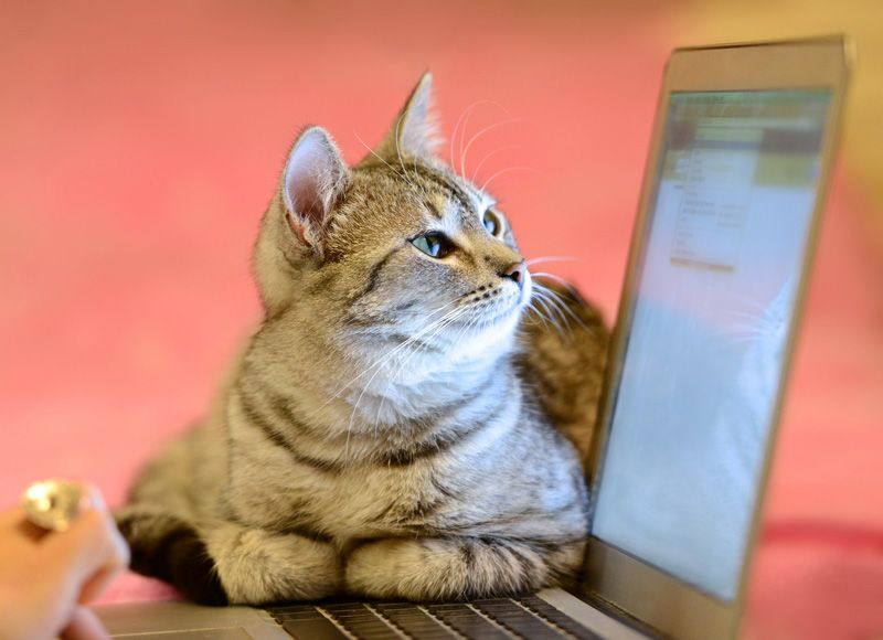 A cat looking at a puter with a list of the best pet blogs to follow
