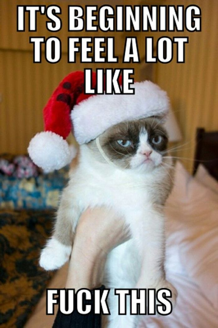 Explore Funny Cats And Dogs Cat And Dog Memes And More on dogs christmas