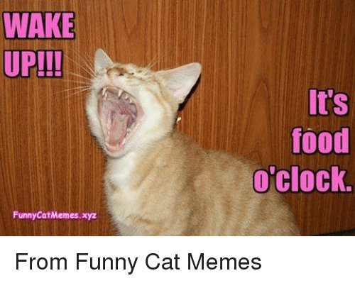 Clock Memes and 🤖 WAKE UP Funny CatMemes It s