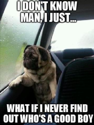 Funny pictures about Introspective pug questions his life Oh and cool pics about Introspective pug questions his life Also Introspective pug questions