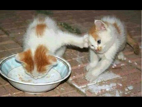 Funny Cats And Kittens Who Don t Want To Their Food pilation [BEST OF]