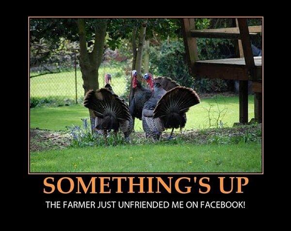 thanksgiving meme 017 farmer unfriended turkey
