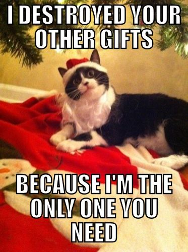 Overly Attached Christmas Cat Merry Christmas More