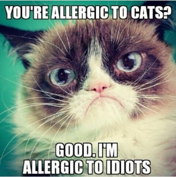 do you know what i am allergic in angry cat meme