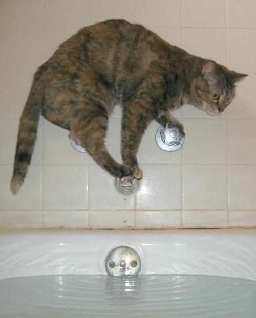 Take the Inspirational Funny Cat Water Pictures