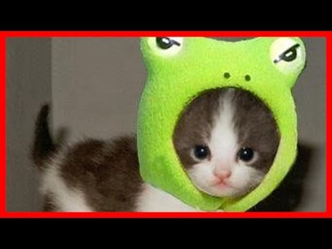 Cute Cats Wearing Costume