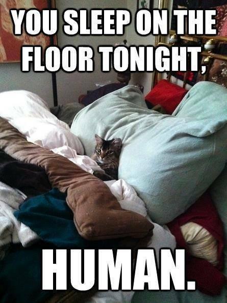 Cat Sleeps All Day