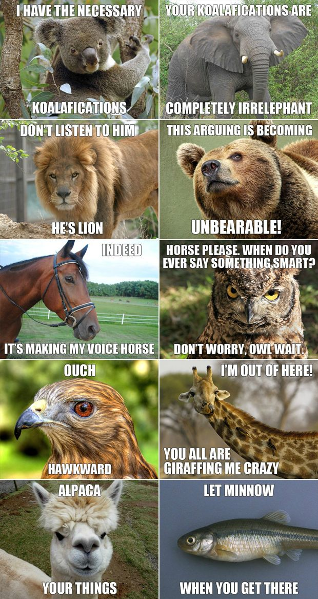 funny animals meme 5 7 3 2 1 2 3 5 7 8