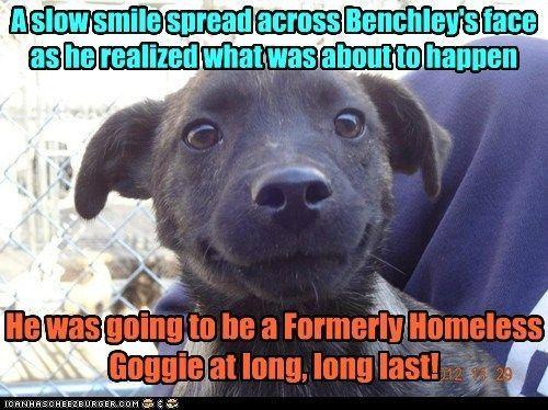 Formerly Homeless Goggie Dog MemesFunny