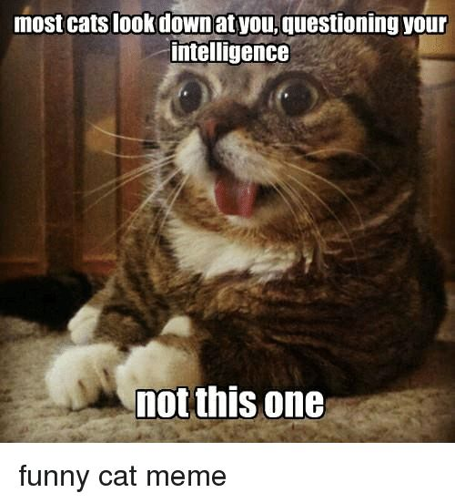 Take the Lovely Funny Pictures Of Cat Meems